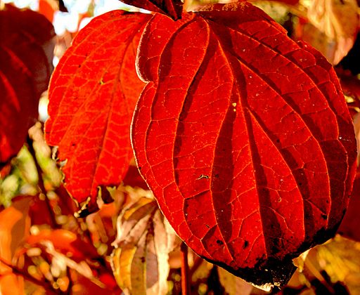 XN_Autumn_leaves_351