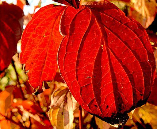XN_Autumn_leaves_351