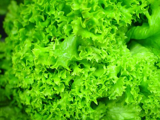 memory Hydroponic_lettuce_leaves_green